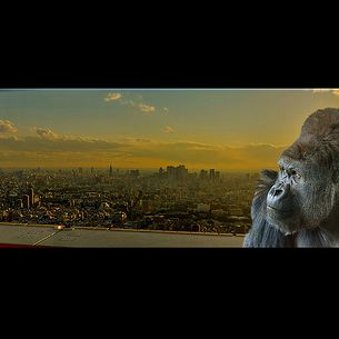 A Gorilla in Tokyo,Panorama